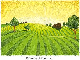 Fields in Summer