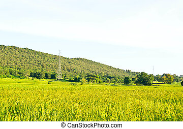 Fields in the countryside