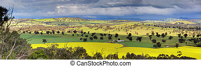 Fields of Canola and farmlands panorama