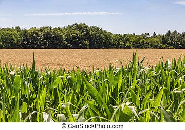 Fields of Cereals