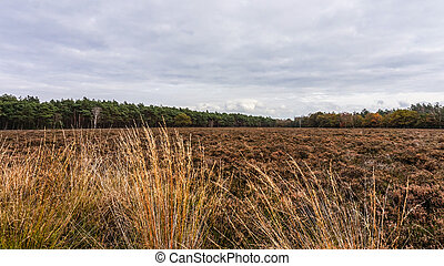 Fields of Heather in the Fall