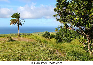 Fields of Saint Kitts