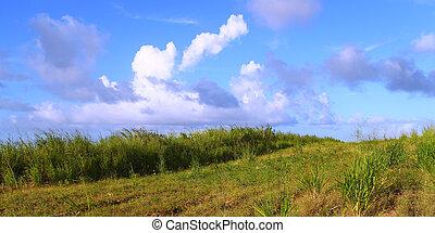 Fields of Saint Kitts