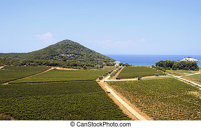 Fields of vineyards by the sea