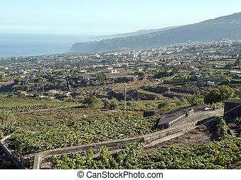 Fields of vineyards
