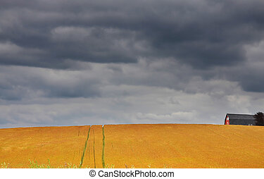 Fields on a stormy weather