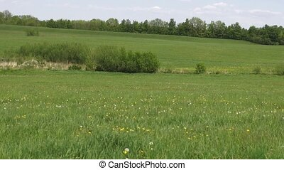 Fields, Plains, Meadows, Pastures, Landscapes