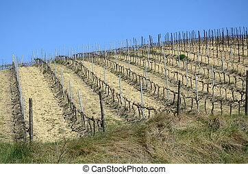 fields with vineyards