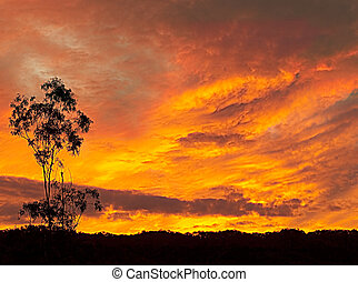 Fiery Australian sunset silhouette late evening background