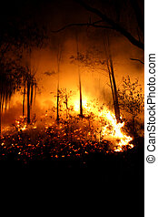 Fiery Night - From a bushfire in 2007 where 2000 Hectares ...