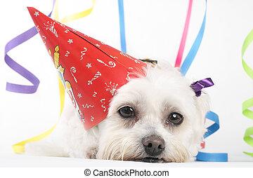 fiesta, perro