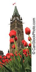 fiesta, tulipán, ottawa