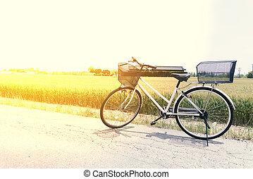 fiets, straat, akker, rijst