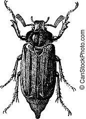 Fig 10. Cockchafer or May bug, vintage engraving. - Fig 10....
