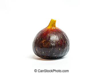 Fig--Black Genoa Gene, Ficus Fruit