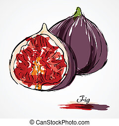 Fig fruit - Hand drawn vector ripe purple fig fruit on light...