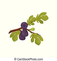 Fig tree branch vector Illustration on a white background