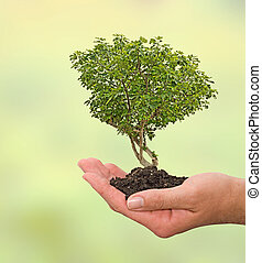 Fig tree in hand