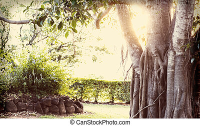 Fig Tree - Old fig tree with a retro filter, bleached with a...