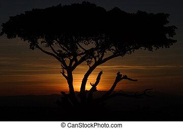 Fig Tree Sunset