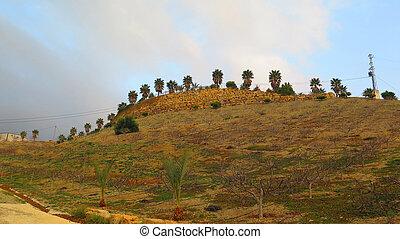 Fig trees in winter on sunny hillside