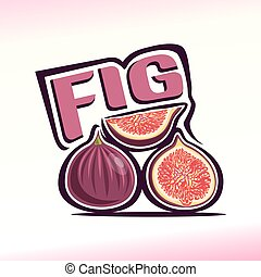 Fig - Vector illustration on the theme of the logo for fig,...