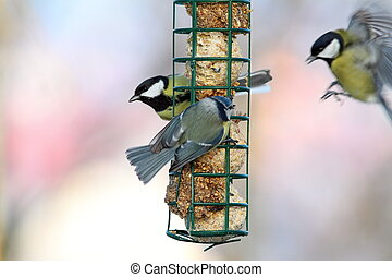 fight for food at lard feeder