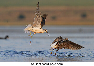 Fight two waders