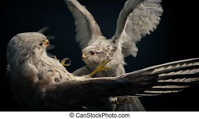 Fighting Birds Of Prey Stuffed Animal Display - Tracking ...