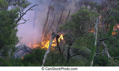 Fighting fire, fire storm in the forest