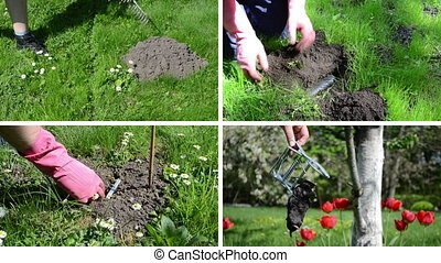 Fighting mole rodent in garden. Leveling mole hill with rake tool. Hand hold dead animal. Montage of video footage clips collage. Split screen. White angular frame. 4K UHD 2160p