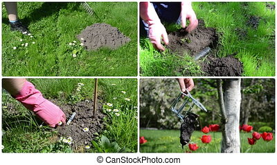 Fighting mole rodent with trap in garden. Clips collage. -...
