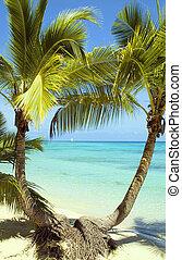 figi, isola, spiaggia