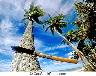 figi, machete, su, uno, albero palme cocco, in, corallo,...