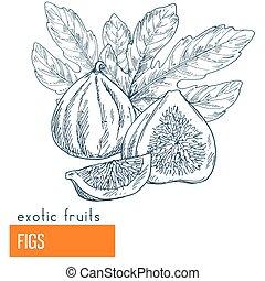 Figs. Hand drawn vector illustration