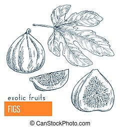 Figs. Hand drawn vector illustration