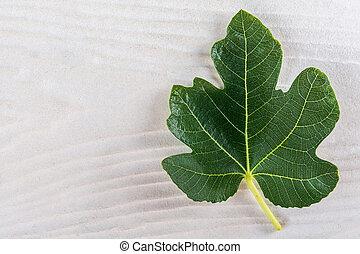 Figs Leaf Similar To Maple Leaf