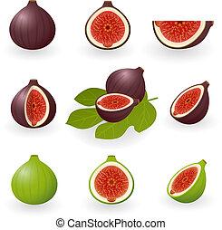 Vector illustration of figs