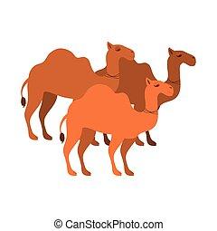 figura animal, de, camelos, caricatura