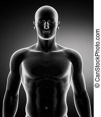 figura masculina, en, anatómico, posición, superior, parte