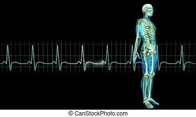 figure and electrocardiogram  - image of human body