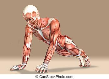figure, monde médical, exercisme, illustration, mâle, 3d