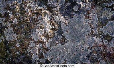 figure, passé, lichen, en mouvement, rocher, couvert