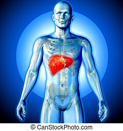 figure, render, monde médical, mis valeur, foie, mâle, image, 3d