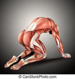 figure, render, monde médical, position, mâle, agenouillement, 3d