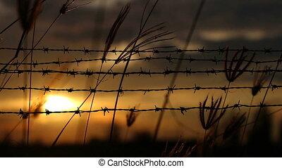 fil fer barbelé, coucher soleil