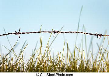 fil fer barbelé, herbe