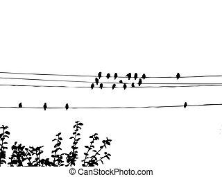 fil, waxwings, oiseaux