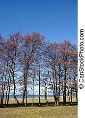 fila, árvores, costa