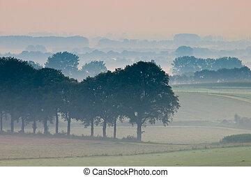 fila, de, árvores, em, nebuloso, paisagem